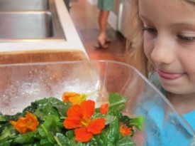 We're Eating Flowers: Our 3 Favorite Recipes, by Virginia Suardi (8 years old) Thumbnail