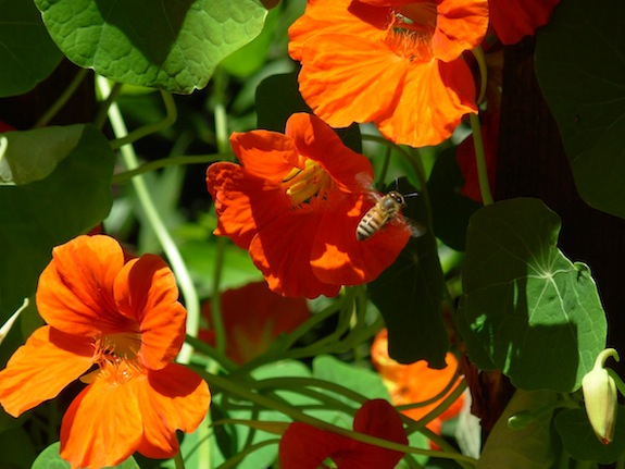 Seed-Saving: How to Get More Gifts from the Garden Thumbnail
