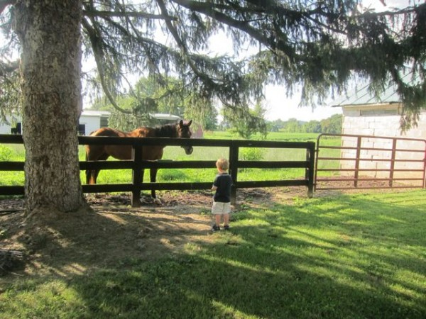 Toddler boy at fence with horse at farm in the countryside of Ohio