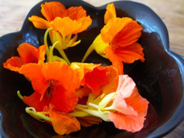 Edible Nasturtium flowers, from How to Know What to Grow in Your Garden @ Frugal-Mama.com